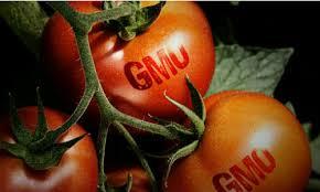 THỬ NGHIỆM VI SINH – SINH VẬT BIẾN ĐỔI GEN (GMO)