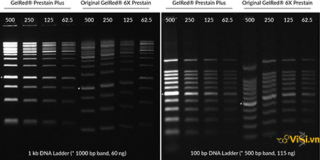 Chất nhuộm DNA 6X GelRed Loading Buffer with TriColor