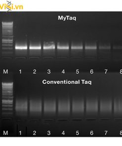 Enzyme Taq DNA polymerase