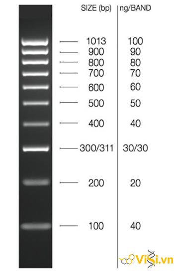 DNA HyperLadder 100bp - Thang chuẩn DNA 100bp Bioline