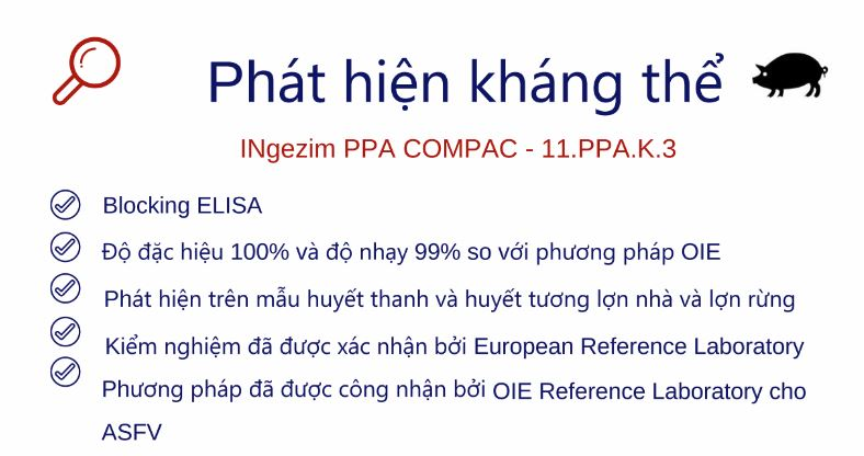Phat-hien-khang-the-trong-lon-bị-nhiem-dich-ta-lon-chau-phi