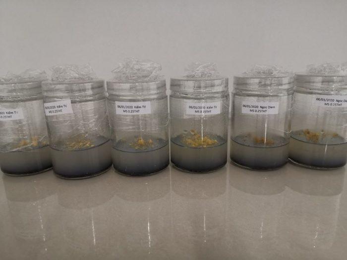 Cơ sở khoa học của nuôi cấy mô thực vật