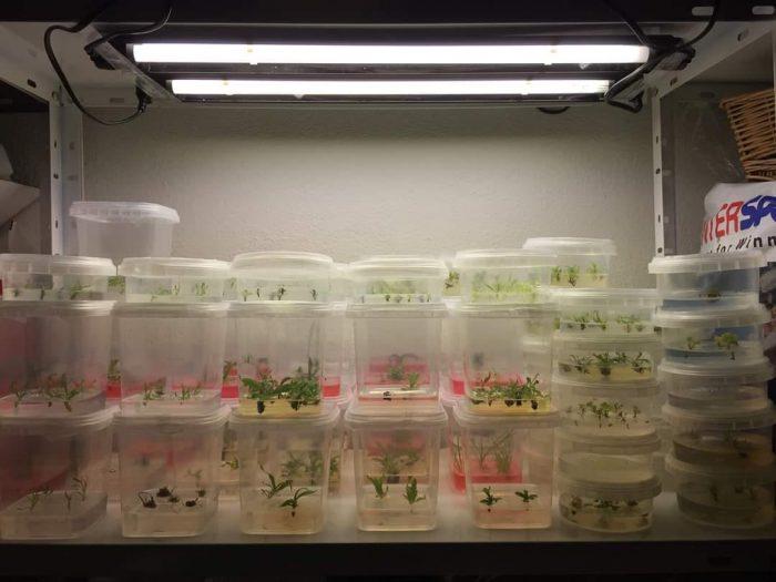 khóa học nuôi cấy mô tế bào thực vật tại Tp.HCM